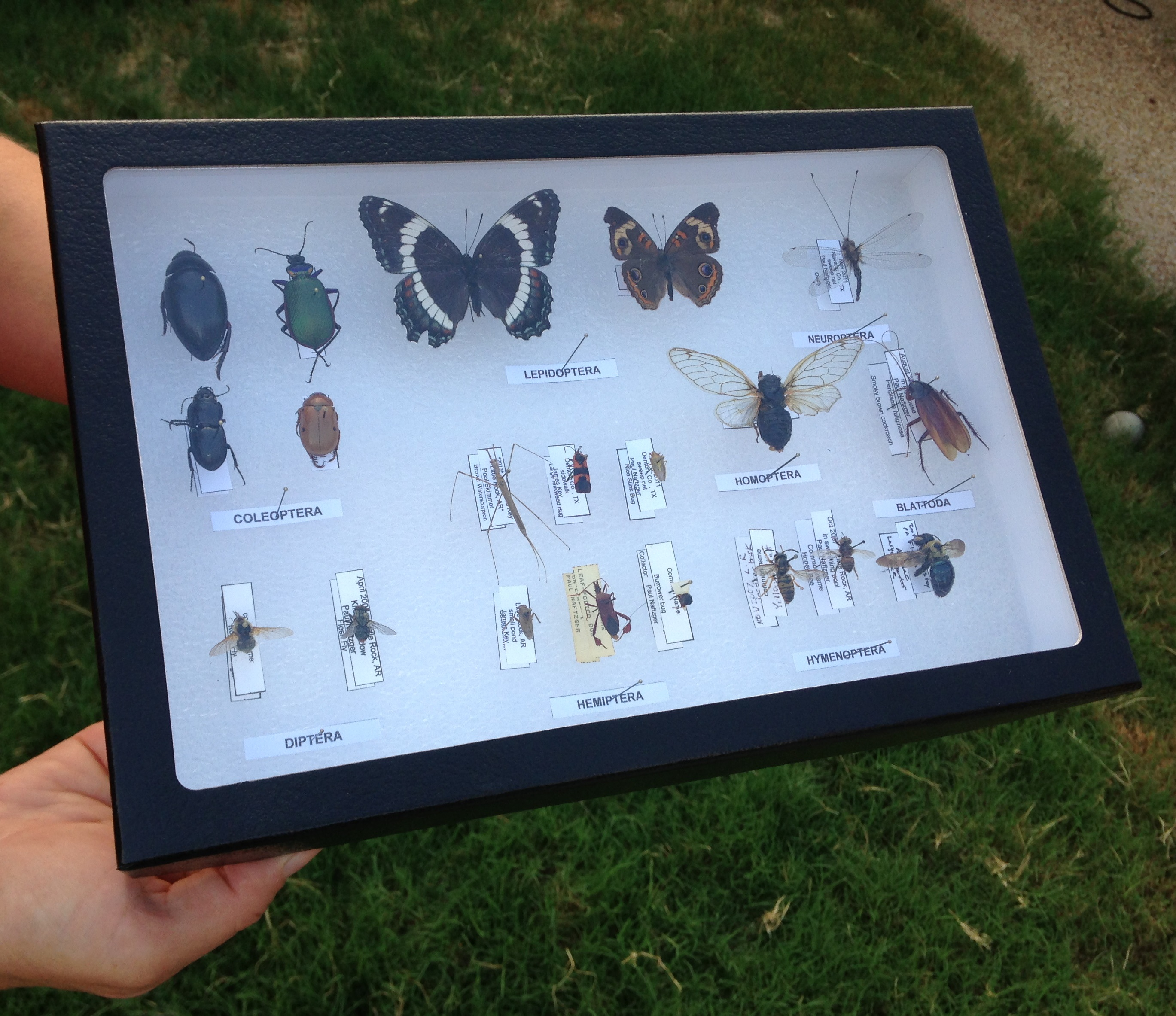 How to build an insect collection
