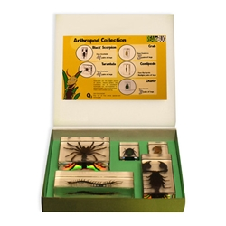 Arthropod Collection set, 5pcs, with Instruction