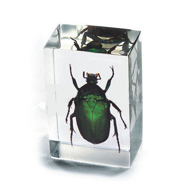 Green Chafer Beetle