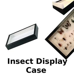 Insect Display Case