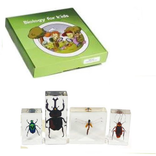 Insect Specimen Set,4pcs,with instruction