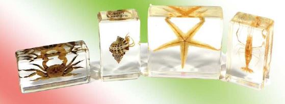 Sea Life Specimen Set,4pcs,with instruction - 2