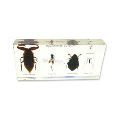 aquatic insect collection (6 1/2 x 3 x 1 in)