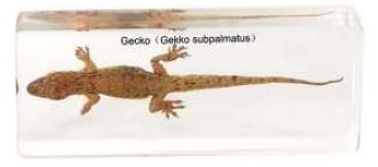 Gecko ( 4 5/8 x 1 5/8 x 3/4 in)