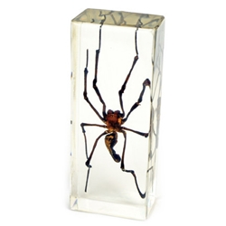 golden orb-spider