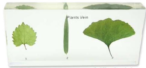 plants vein (6 1/2 x 3 x 1 in)