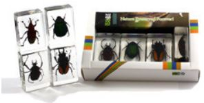 Beetle set - 4 blocks