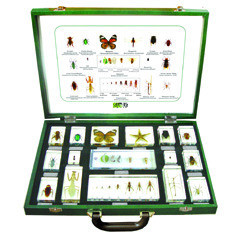 16 pcs Arthropod Specimen Kit