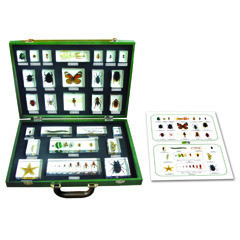 27 pcs Arthropod Specimen Kit